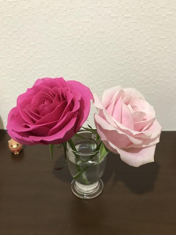 桜井亜美|今週のお花さん❁✿✾  ✾✿❁︎