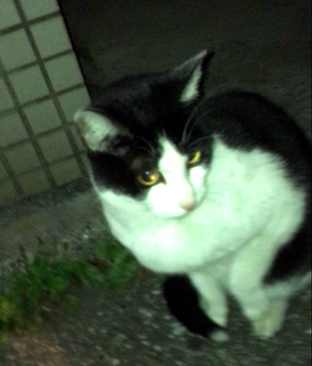 水城 希美 Club Luminous[キャバクラ/松山市二番町]さんのブログページへはこちらから