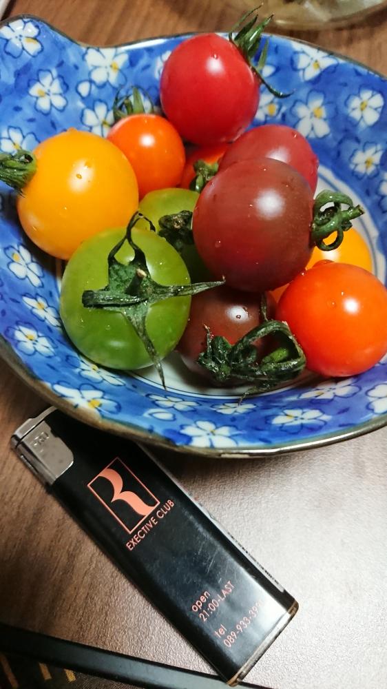 かつき|カラフルトマト★