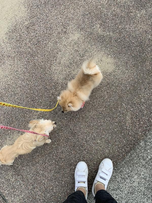 きょん|◎お散歩