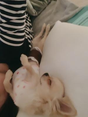 きょん|◎犬のいびき
