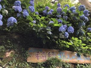 りあ|紫陽花♡(੭ ˃̵͈́∀˂̵͈̀)
