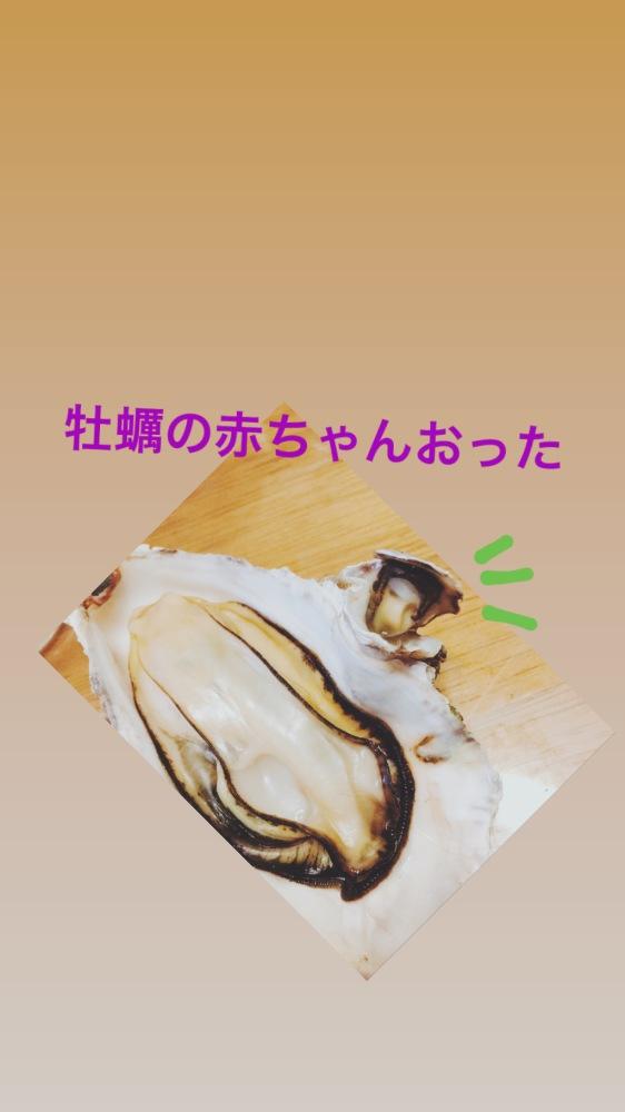 亜桜いろは♪|牡蠣の赤ちゃん🐚