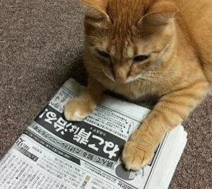 春菜 拓人 カクレモモジリ