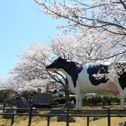 まなみ(Club IST)[キャバクラ/愛媛県松山市]さんの情報はこちらから